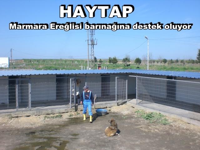 bambam9